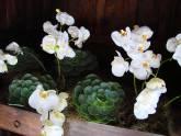 BEM-ME-QUER - Ornamentação Floral