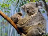 O Koala - Loja de Animais