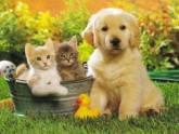 Fundación Perros en Adopciòn