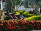 Geovivero medell n viveros plantas paisajismo for Viveros medellin