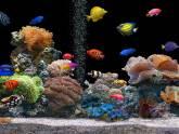 FJ aquarios