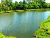 Piscicultura Agua Verde