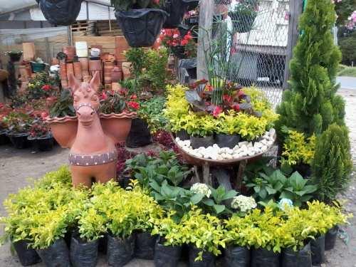 Vivero serviplantas bogot viveros en guaymaral for Viveros frutales bogota