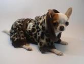Tienda de ropa y accesorios para mascotas en CHILE MASCOTAS